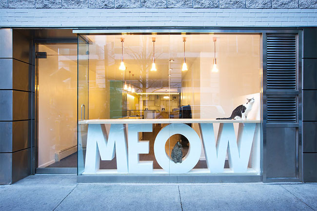 Un bar à chats vient d'ouvrir à New York