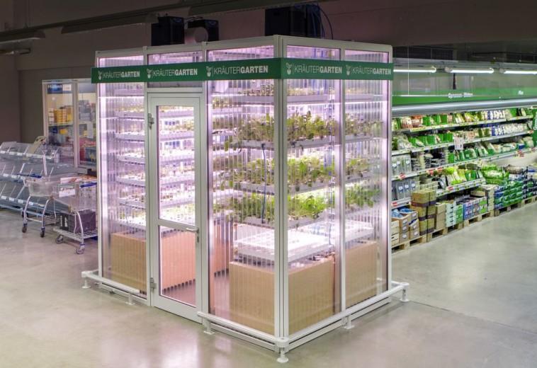 Un supermarché berlinois installe une ferme à l'intérieur du magasin